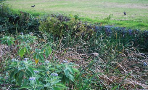 River Bank With Weeds