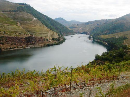 river douro douro vineyards douro landscape