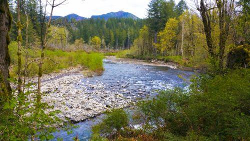 upė, vaizdingas, fonas, vanduo, medžiai, spalva, spalvinga, upė miške