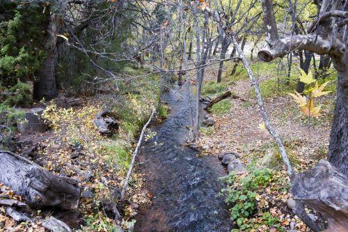 miškai, upė, vanduo, srautas, tamsi, kritimas, spalva, upė miške