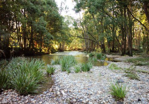 riverbed golden light forest