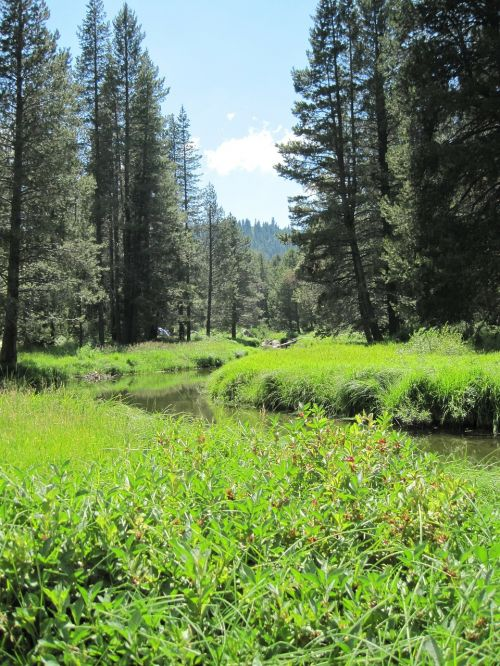 rivers streams california