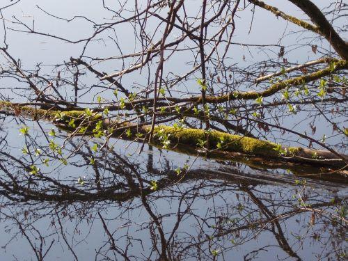 riverside log water