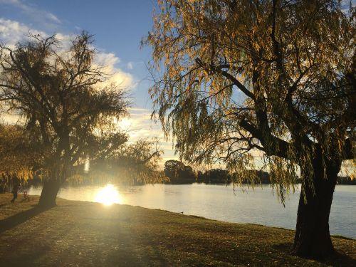 riverside sunset trees