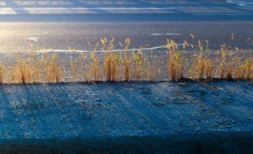 road weeds shadow