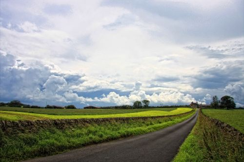 road countryside nature