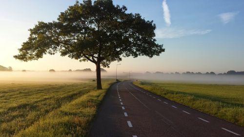 road tree fog
