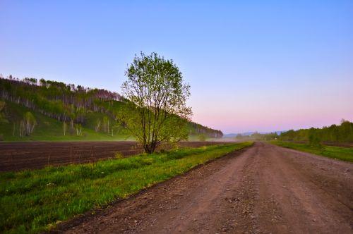 gamta, kraštovaizdis, kelias, medžiai, medis, laukas, dusk, vakaras, kelias