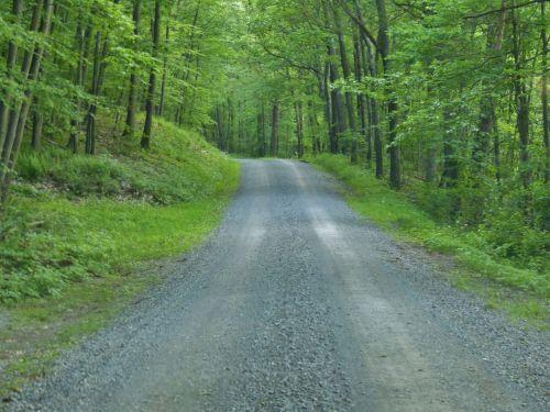 kelias, purvas, žvyras, miškai, miškas, medžiai, kelionė, kelias, kelias