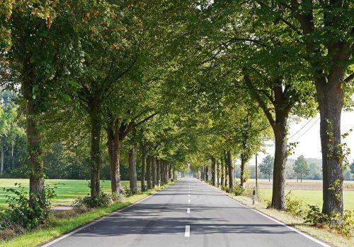 kelias,lindenallee,Münsterland,frühherbst,maršrutas,centrinė rezervacija,skyriai,dirvožemis,pieva,plokščią žemę,butas,Šiaurės Reinas,Vestfalija,Vokietija,šešėlis,alėja,kelių ženklinimas,alverskirchen,ilgas šešėlis,kraštovaizdis,linda,ruduo,laukai,žalias,žolė,ariamasis,šviesa ir šešėlis,princas