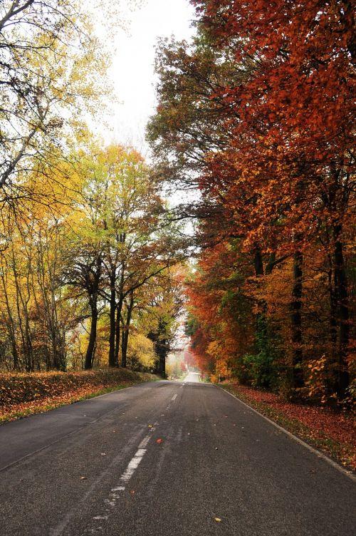 road autumn autumn landscape