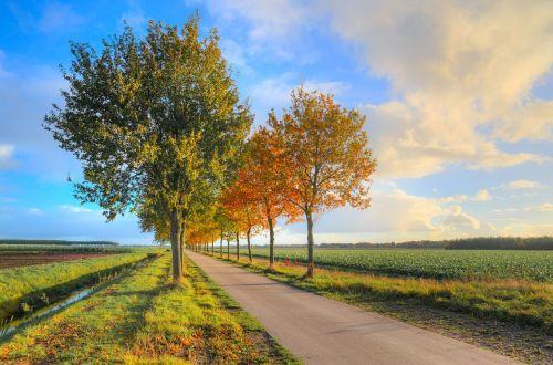 road foliage trees
