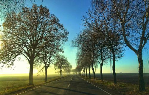 road avenue autumn landscape
