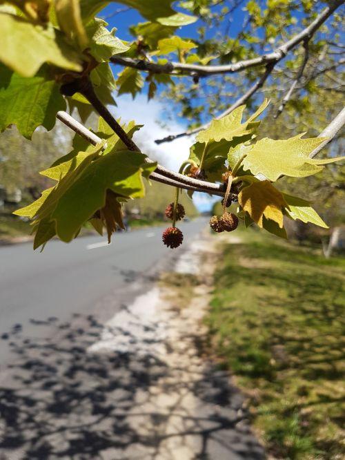 road tree leaves