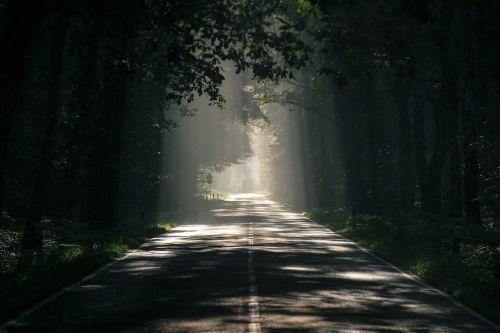 road avenue trees