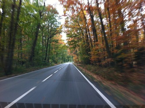 road autumn speed