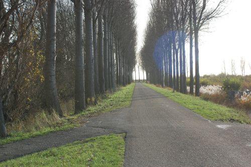 road trees row