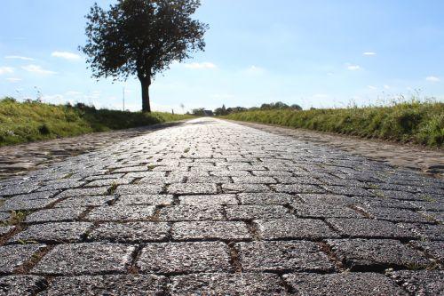 road cobblestones tree