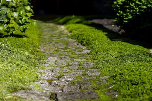 kelias,dangas,kőjárda,akmenuotas kelias,kelias,gamta,žalias,augalas,sodas,grožis,gražus,taikus
