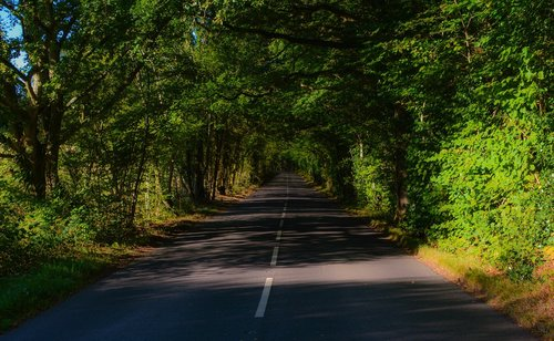 road  forest  shadows