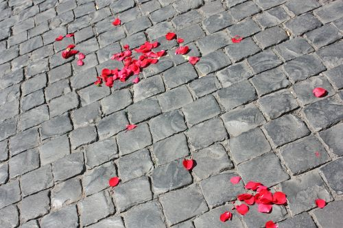 road paved petals of roses