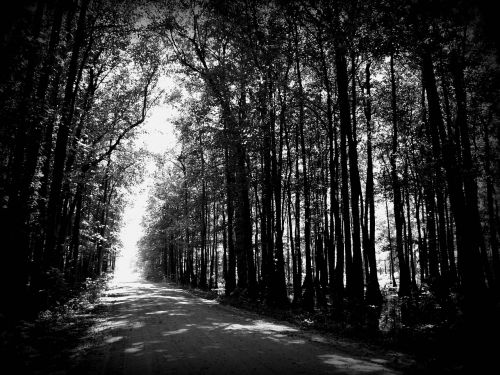 road gray street