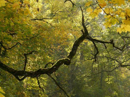 branch bemoost autumn
