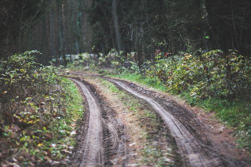 kelias,kelias,kelias,miškas,miškai,mediena,medinis,purvas,kritimas,ruduo,purvinas,offroad,off-road