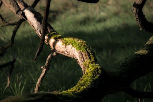 branch moss green