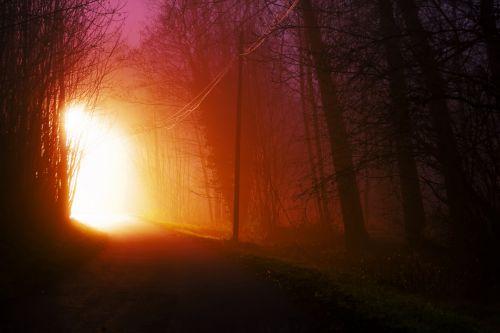 šviesus, tamsi, miškas, greitkelis, šviesa, žibintai, linija, naktis, kelias, kelionė, kelias, kelias naktį