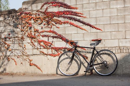 road bike road cycles
