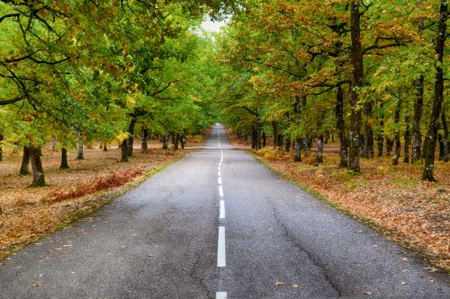 kelias, miškas, ruduo, kraštovaizdis, Graikija, foloi, kentauras, gamta, kelias, kritimas, lapija, sezonas, geltona, lapai, mediena, parkas, Šalis, žalias, kelias, lapai, migla, vaizdingas, spalvinga, aplinka, spalva, įkvėpimas, motyvacija, medžiai, kelionė, kalvos, miškai, out, kelias, einantis miške