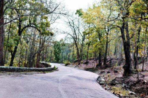 kelias, miškas, kelias, takas, gamta, medžiai, šviesa, kelias per mišką
