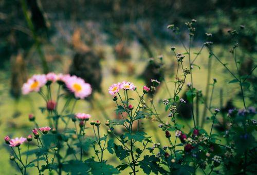 roadside wild flowers artistic conception