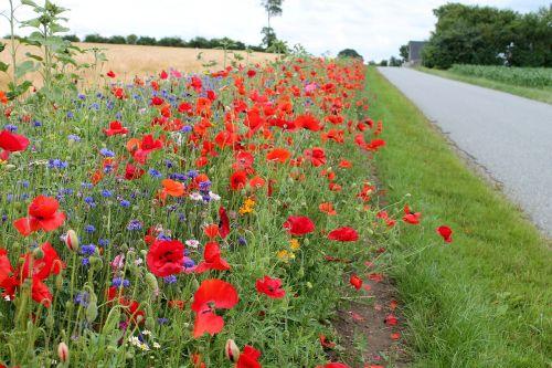roadside flowers denmark