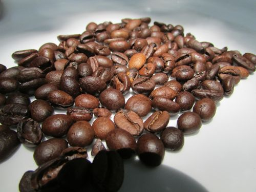 roasted coffee beans dharwad india