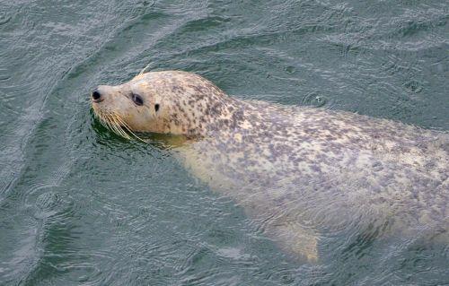 robbe water animal world