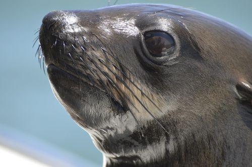 robbe sea meeresbewohner
