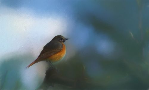 robin red robin painting