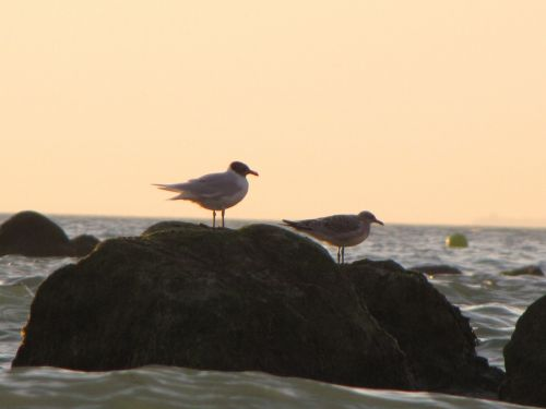 Rock And Seagull