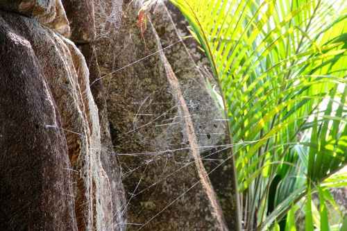 rock plant seychelles