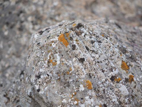 rock limestone weave