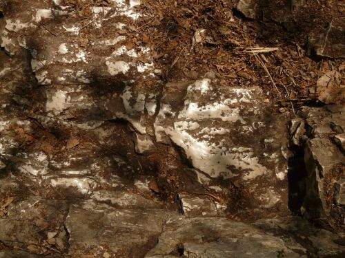 rock stone greasy