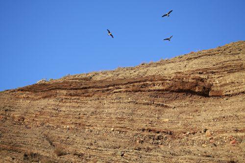 rock seagull seaside