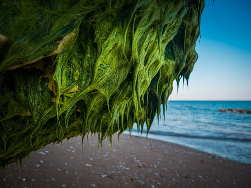 rock  seaweed  sea