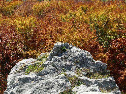 rock stone autumn forest