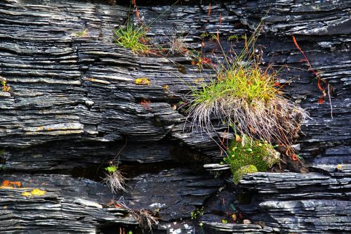 rock grass karg
