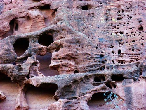 rock sandstone forms