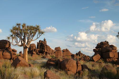 rock formations rocks dichotoma