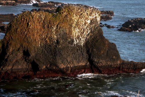 Rock In Low Tide